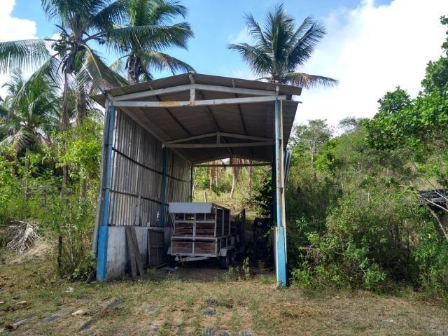 Vendo fazenda com 125 tarefas em Pojuca - Ba - Foto 15