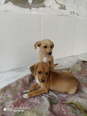 Doação de Cachorros - Foto 5