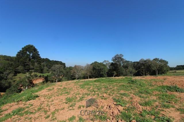Terreno sem benfeitorias no Barro Preto - Foto 10