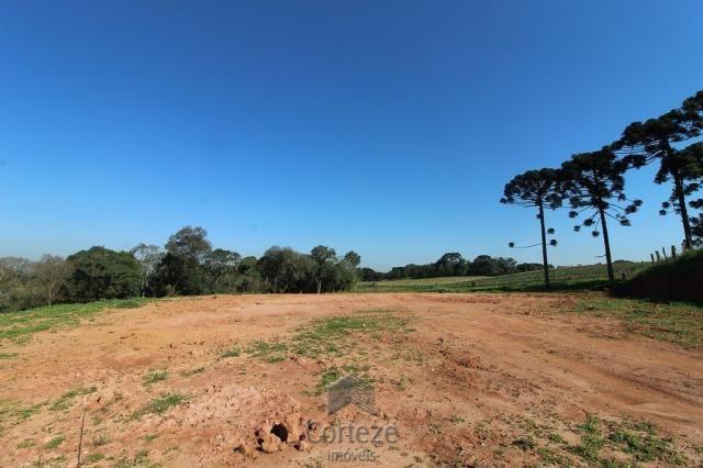 Terreno sem benfeitorias no Barro Preto - Foto 4