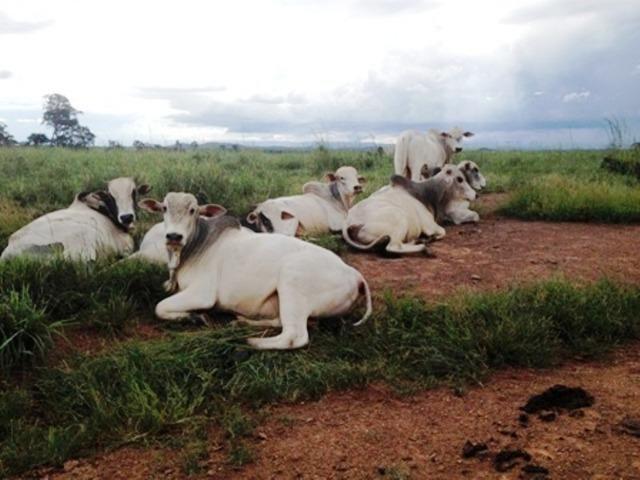 860 Alq. Pega 50% Imóveis Oferta Prazo C/ Entrada Guarani GO - Foto 4