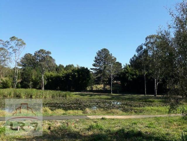 Terreno no Bosque Merhy, Quatro Barras. - Foto 8