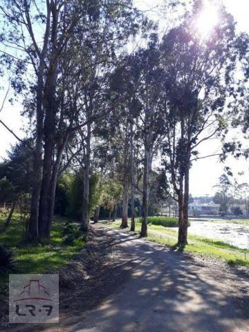 Terreno no Bosque Merhy, Quatro Barras. - Foto 5