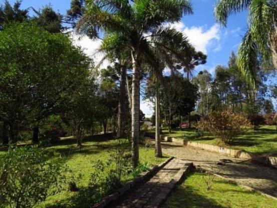 Terreno para alugar em Granja das acacias, Quatro barras cod:13074001 - Foto 9