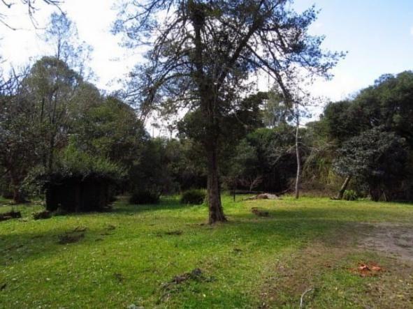 Terreno para alugar em Granja das acacias, Quatro barras cod:13074001 - Foto 2