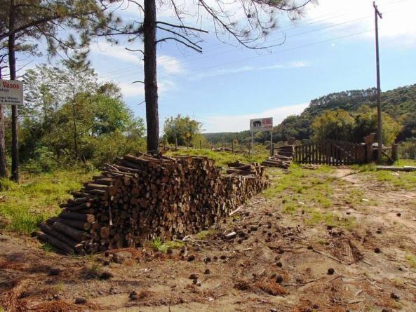 Área de Terras em Muda Boi em Montenegro - 03 - Foto 2