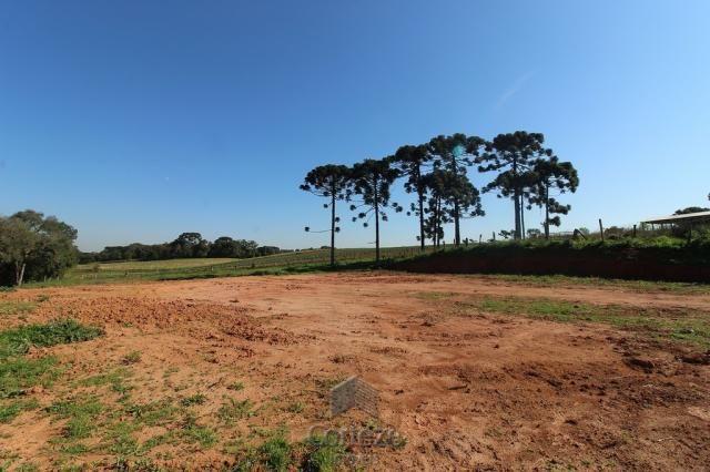 Terreno sem benfeitorias no Barro Preto - Foto 8