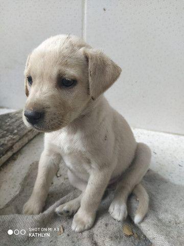 Doação de Cachorros - Foto 2