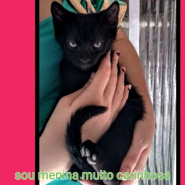 Castrados - Foto 3