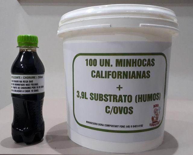 100 minhocas californianas + 3,9l substrato humos