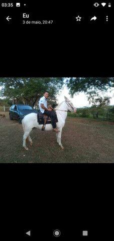 Vendo cavalos e burro  - Foto 2