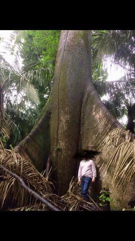 Araguari - ferreira gomes