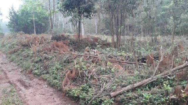 Terreno para fazer arado (mecanizar) - Foto 6