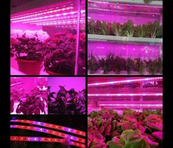 COD-CP325 1 Metro Fita Led Full Spectrum Indoor Grow 7red 1blue Cultivo Aquario - Foto 3