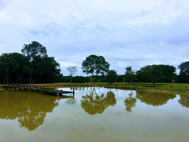 Excelente Fazenda para criação de gado - Foto 17