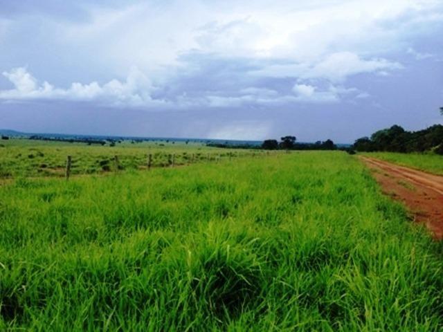 860 Alq. Pega 50% Imóveis Oferta Prazo C/ Entrada Guarani GO - Foto 19