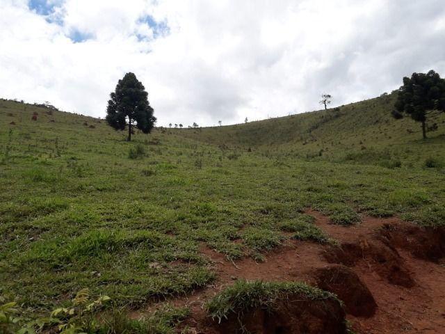 Fazenda no Vale - Cód 1585 - Foto 15