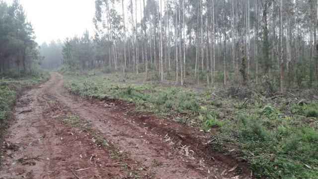 Terreno para fazer arado (mecanizar)