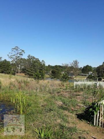 Terreno no Bosque Merhy, Quatro Barras. - Foto 12