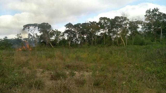 50 hectares valor 45000 região na região de bom Jardim - Foto 2