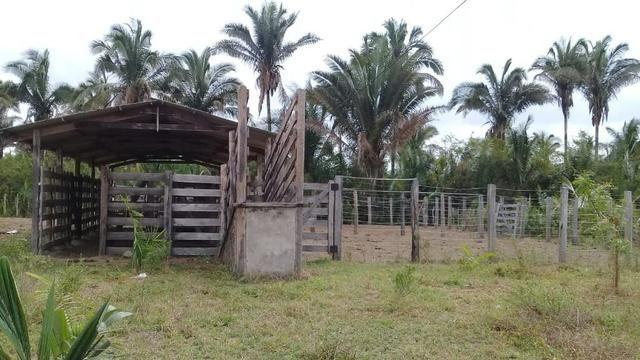 Vende-se Fazenda (abaixo o preço p vender logo) - Foto 7