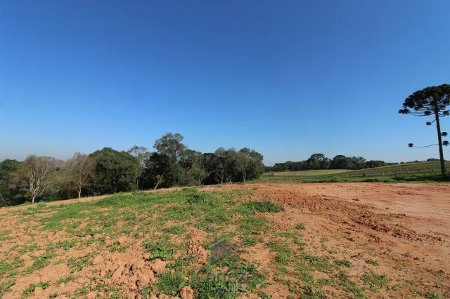 Terreno sem benfeitorias no Barro Preto - Foto 9