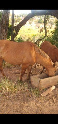 Vendo cavalos e burro