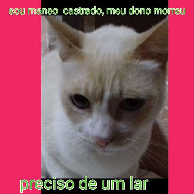 Castrados - Foto 2