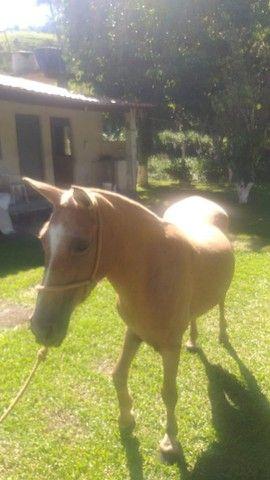 Cavalo e égua  - Foto 2