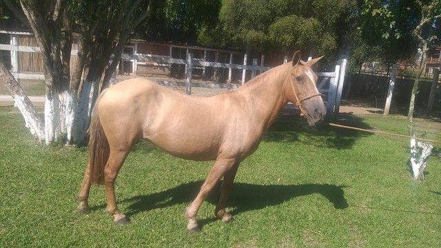 Cavalo e égua  - Foto 3