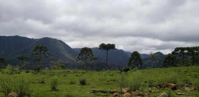 Sitio chácara em Urubici com vista para as montanhas - Foto 7