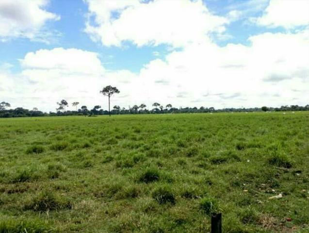 Colônia com 84 Hectares de terra Titulada - Foto 3