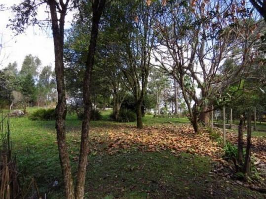 Terreno para alugar em Granja das acacias, Quatro barras cod:13074001 - Foto 6