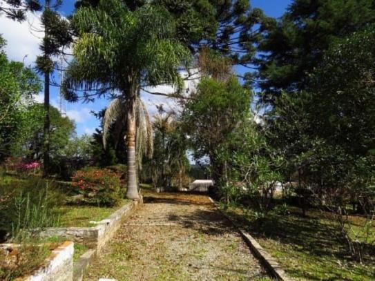 Terreno para alugar em Granja das acacias, Quatro barras cod:13074001 - Foto 8