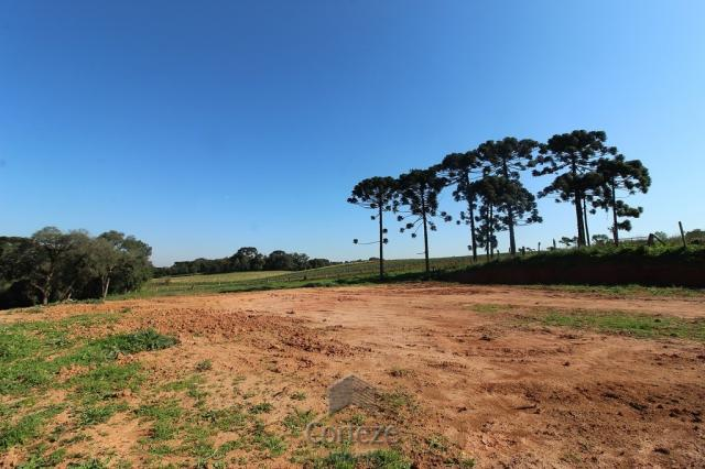 Terreno sem benfeitorias no Barro Preto - Foto 6