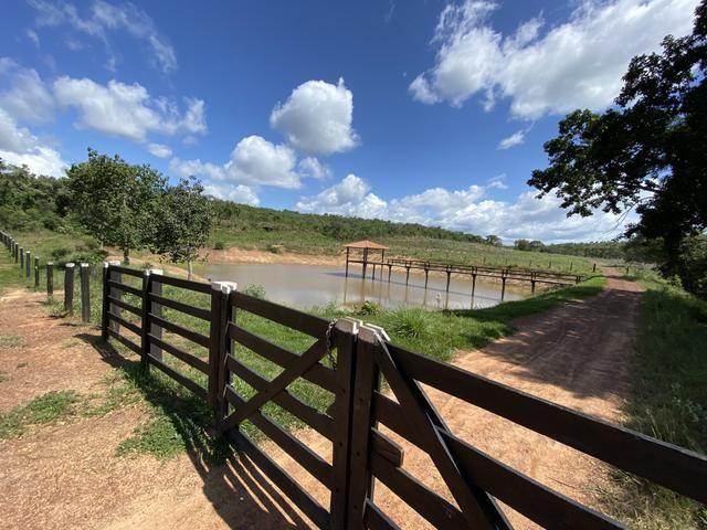 Excelente Fazenda para criação de gado - Foto 10