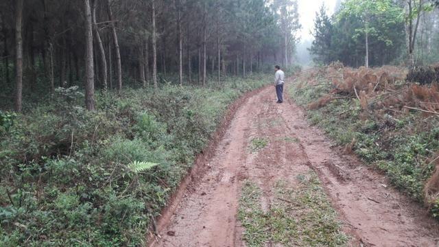 Terreno para fazer arado (mecanizar) - Foto 4