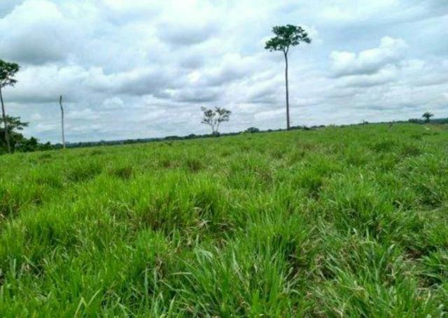 Colônia com 84 Hectares de terra Titulada - Foto 5