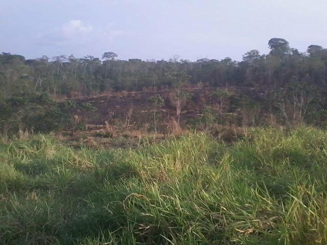 Colônia com 84 Hectares de terra Titulada - Foto 12