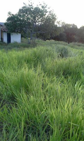 Fazenda em Ribeira do Pombal - Foto 14