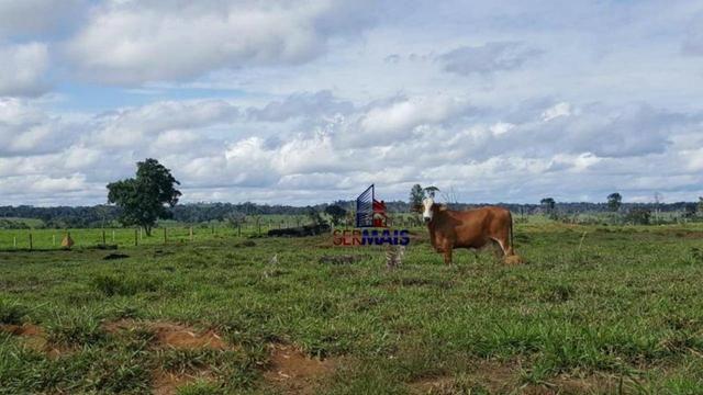 Fazenda Localizada na cidade de Buritis-RO - Foto 16