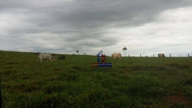 Fazenda Localizada na cidade de Buritis-RO - Foto 2