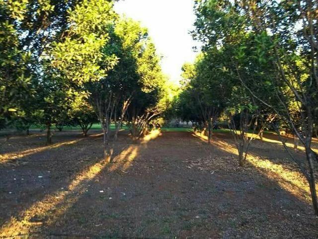 Fazenda 14alq Pronta Buritirana Palmas 1.2milh Ac Prop Airton - Foto 14