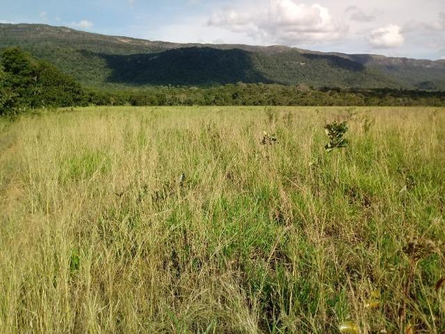 Fazenda com dupla aptidão em Rosário Oeste Mato Grosso - Foto 6