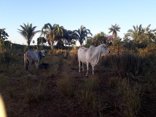 Chácara em Acorizal 38,2 hectares - Foto 15