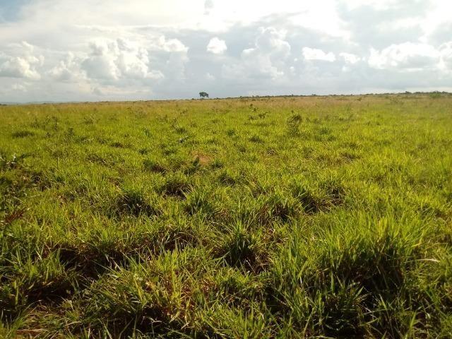 Fazenda com dupla aptidão em Rosário Oeste Mato Grosso