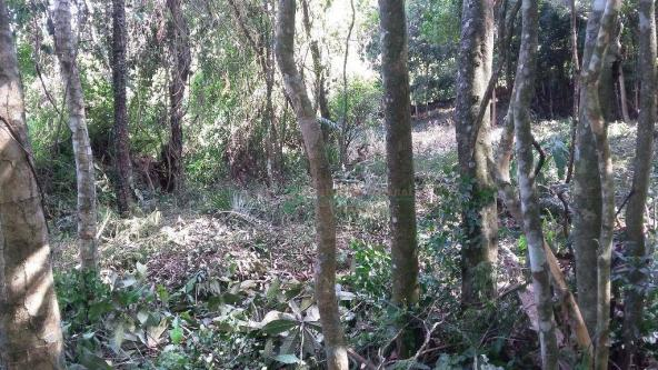 Terreno residencial à venda, Três Córregos, Teresópolis. - Foto 17