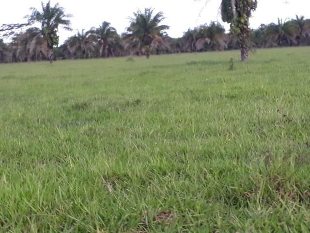 Fazenda Terra de cultura em Arenapolis - Foto 2