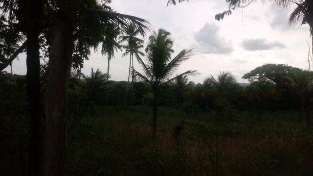 Ótima propriedade de 2 hectares, em Chã de Alegria-PE. R$ 140 mil - Foto 6
