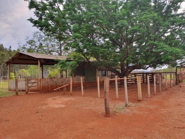 Chácara 08 hectares -próximo de C.Grande -Preço de 1.200.000 por 890.000 - Foto 19